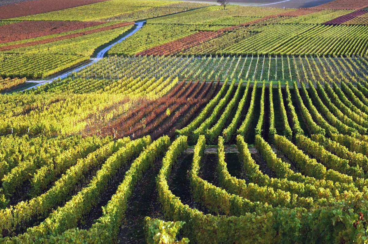 Prestations Complémentaires | Visites De Chateaux - Vins